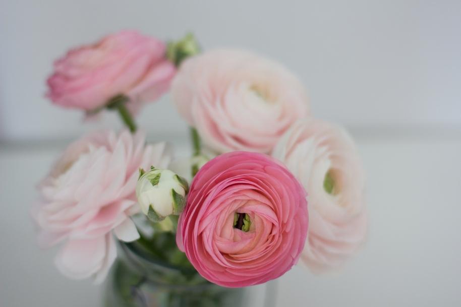 Blumen  (17 von 18)