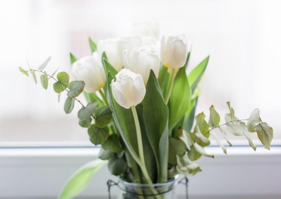 Tulpen (3 von 9)