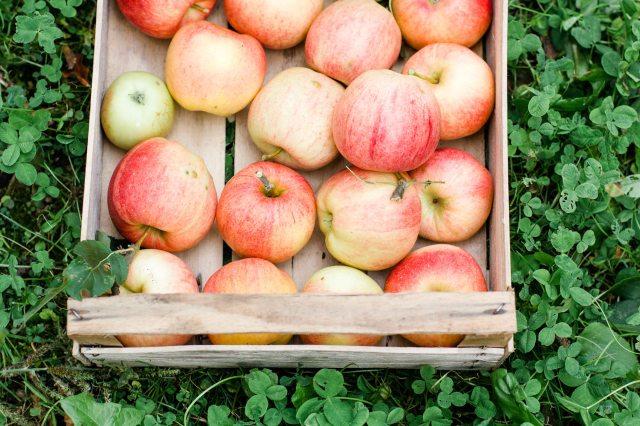 Äpfel (29 von 32)